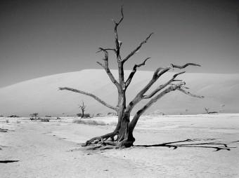 Verdorrter Baum in einer Trockenwüste